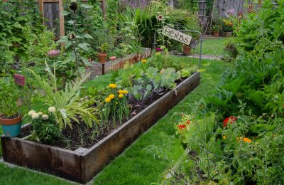 Tips For Backyard Farming