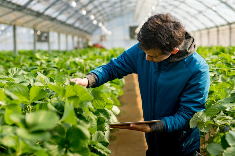 Agriculture Study Programs In Quebec